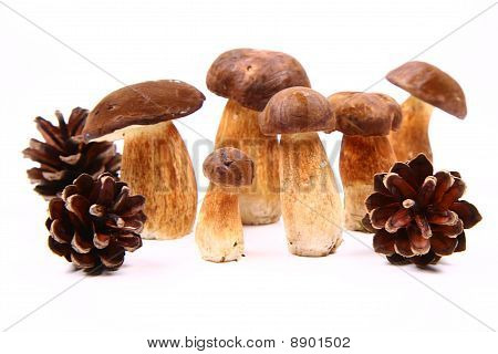 ocomus mushrooms