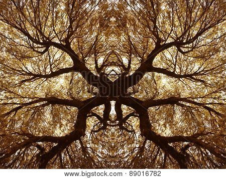 Oak Holm Branches And Leaves In Warm Tone. Kaleidoscopic View