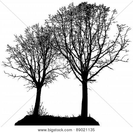 vector silhouette of two trees