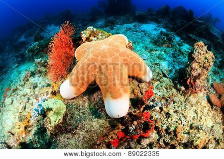 Large Starfish On A Reef