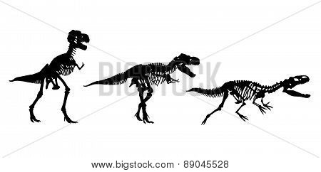 Three Skeletons Of Dinosaurs