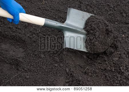 Shovel On Field, Digging Hole With Spade In Field