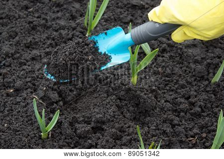 A Gardener's Gloved Hand Planting  With A Small Trowel In A Herb Garden