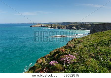 Newquay coast North Cornwall UK in spring with blue sky and sea and pink flowers