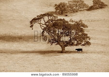 Lonely Tree And Cow