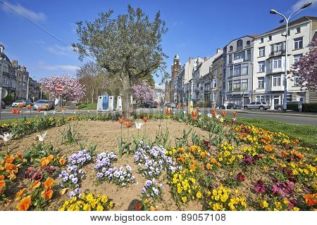 Olivier Tree, Flower Bed And Japanese Cherry Trees