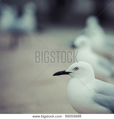 Seagulls In The Nature