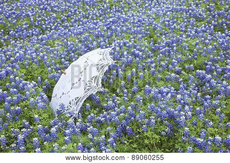 White Lace Parasol In Field Of Texas Bluebonnets