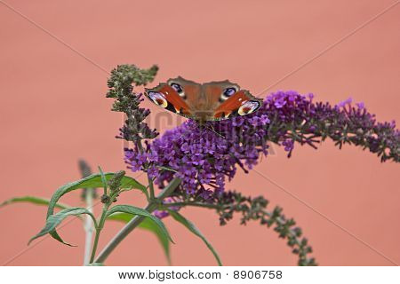 Butterly On Colorful Flower