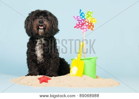 Dog is having holidays at the beach