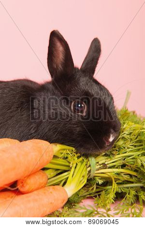 Bunch fresh carrots on green background
