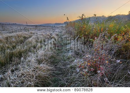 Road Of Autumn with Frost