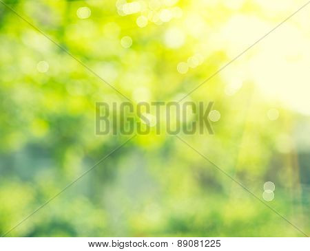 Nature background. Abstract blurred summer green lush bokeh. Defocused leaves with sunflare backdrop