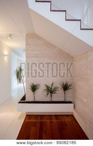 Beauty Plants In Bright Corridor