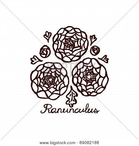 Handsketched bouquet of ranunculuses