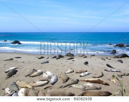 Sea ??lions Asleep On The Beach