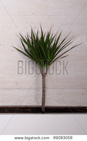 Green Plant On Beige Background