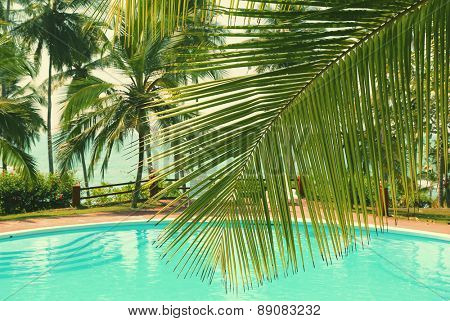 palm leaf in front of the swimming pool by the sea on a tropical resort - vintage retro style