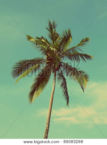 branches of coconut palm against blue sky - vintage retro style