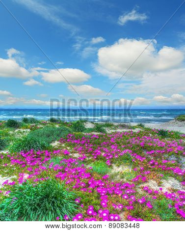 Colorful Flowers By Platamona Shore