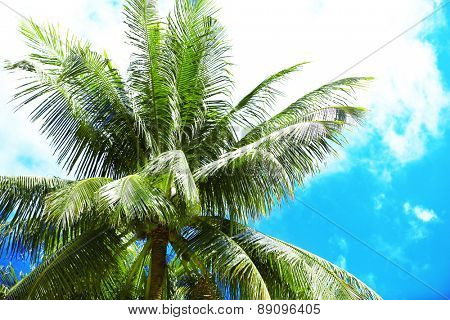Green leaves of exotic palm trees and blue sky
