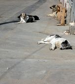 image of stray dog  - image of stray dogs on street at day - JPG