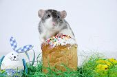 image of rats  - Cute little decorative rat near the Easter cake - JPG