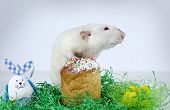 foto of rats  - Cute little decorative rat near the Easter cake - JPG
