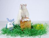 picture of rats  - Cute little decorative rat near the Easter cake - JPG