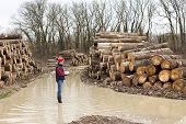 picture of lumber  - Young lumber engineer standing with notebook beside cut trunk stock - JPG