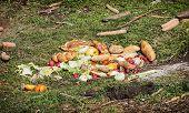 image of feeding  - Food for bears in the zoo - JPG