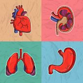 stock photo of internal organs  - Colorful set of internal human organs as heart - JPG