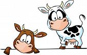 stock photo of peeking  - cow standing and peeks out from behind a white surface  - JPG
