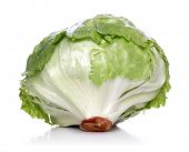 stock photo of water cabbage  - Close - JPG