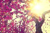 foto of sun flare  - Spring blossom background - JPG