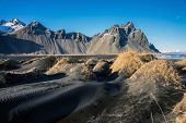 stock photo of lavender plant  - Mountains and volcanic lava sand dunes by the sea in Stokksness - JPG