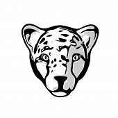 pic of cheetah  - Cheetah head illustration isolated on white background - JPG