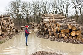 stock photo of lumber  - Young lumber engineer standing with notebook beside cut trunk stock - JPG