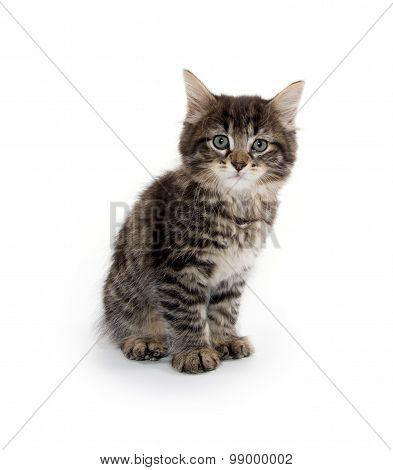 Cute Baby Tabby Kitten On White