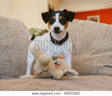 puppy on the couch with toy
