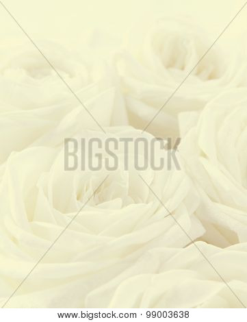 Beautiful Toned White Roses As Wedding Background. Soft Focus.