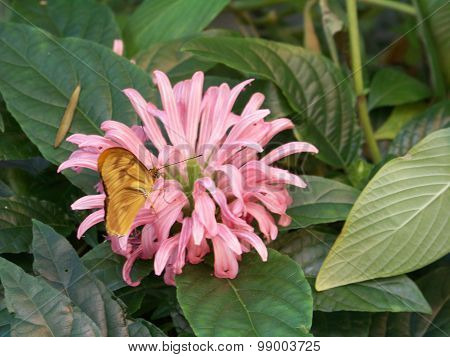 Blooming Butterfly