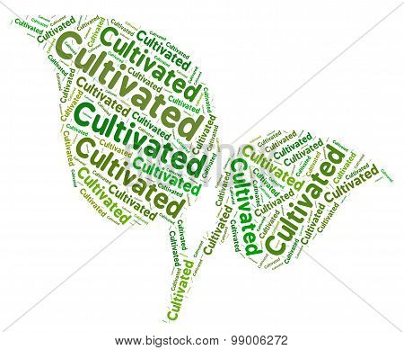 Cultivated Word Represents Sowing Growing And Grows
