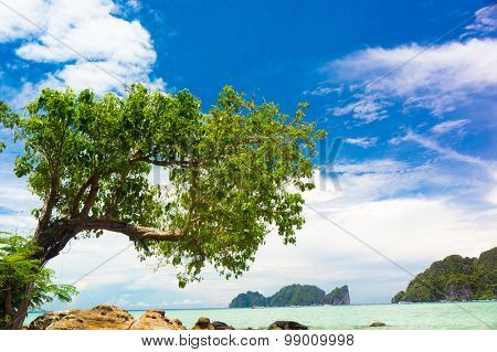 Under Trees Jungle and Sea