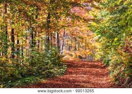 Majestic orange road with sunny beams at autumn forest. Dramatic colorful morning scene. Carpathians, Ukraine, Europe.