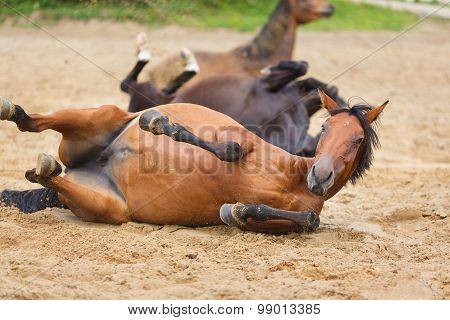 Horse Lying In The Sand