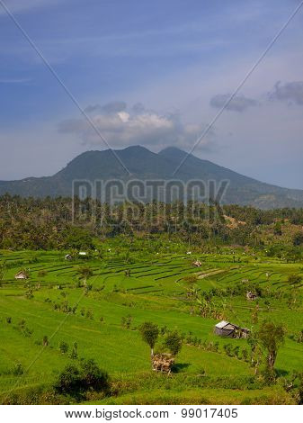 Mountain Over Southeast Asian Agricultural Fields