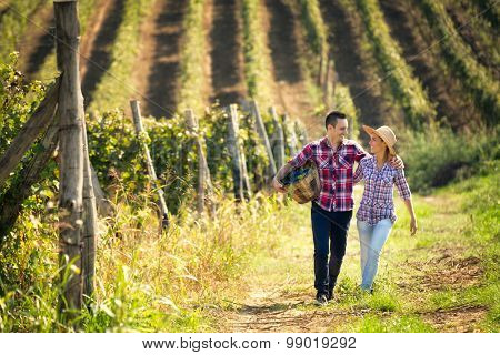 Couple of winegrowers walking through the huge vineyard