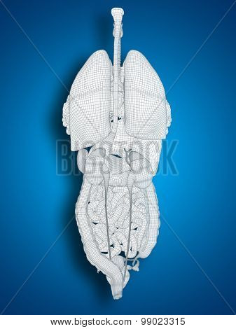 Concept conceptual anatomical human woman 3D black wireframe mesh digestive system on blue background