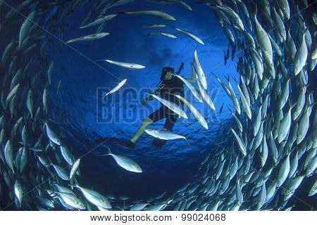 Scuba diver surrounded by fish